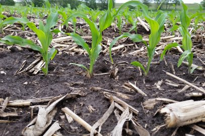 Dialing in profitable nitrogen rate and timing practices